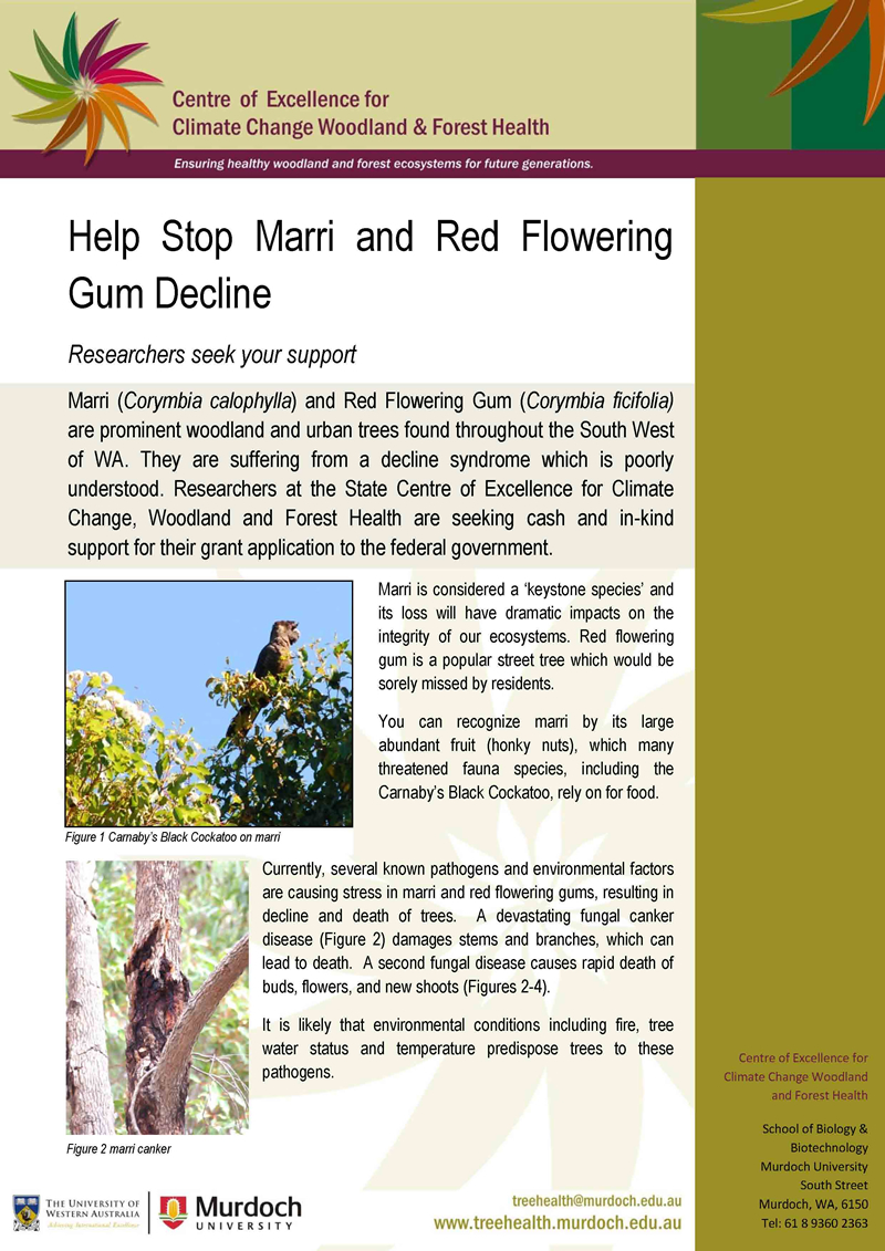 Marri and Red Flowering Gum Decline